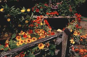 A Mendocino Garden
