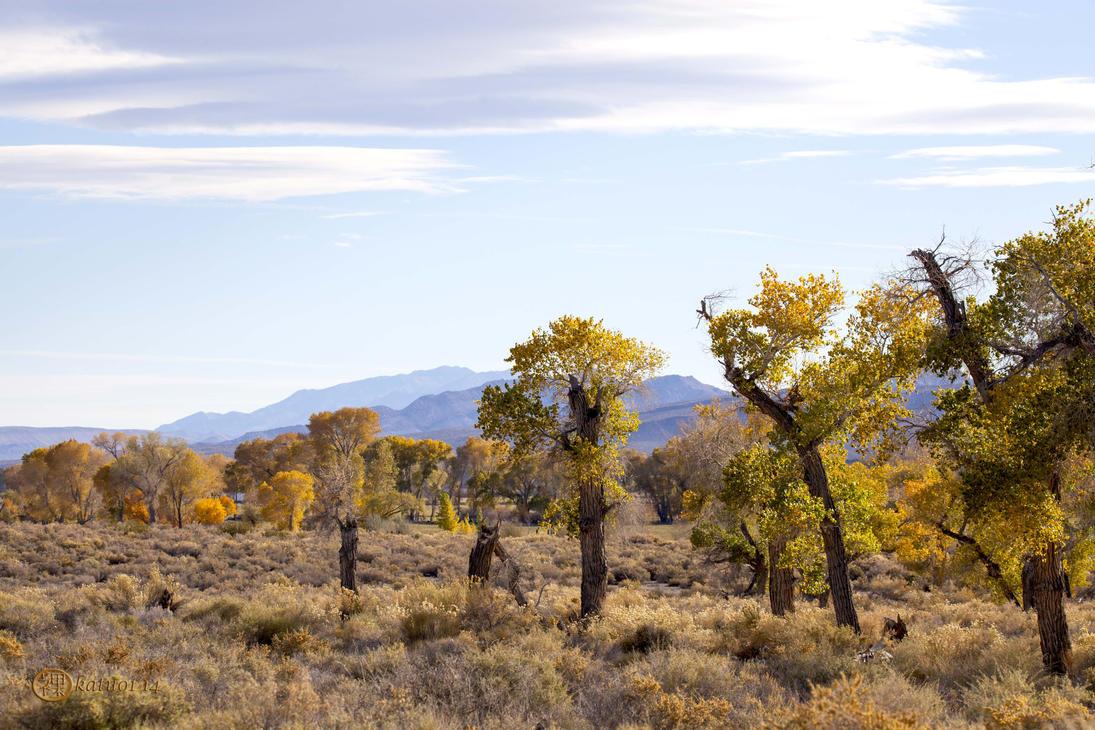 Autumn Pastures by katu01