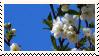 Cherry Blossom Stamp 2 by V-Mordecai