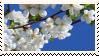 Cherry Blossom Stamp by V-Mordecai