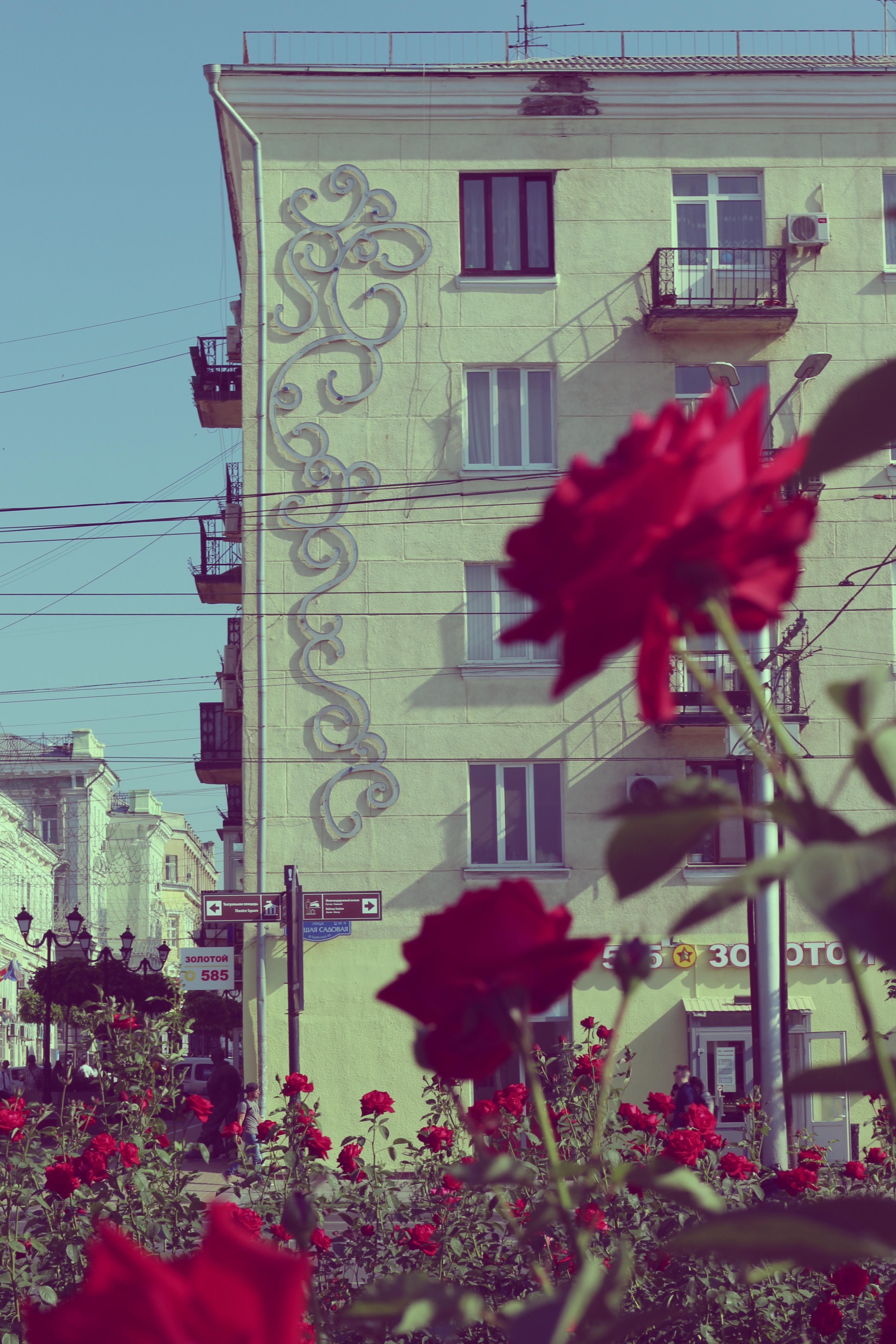 Memories of Summer