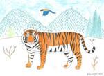 'Animal of the Week' 3. - Siberian Tiger
