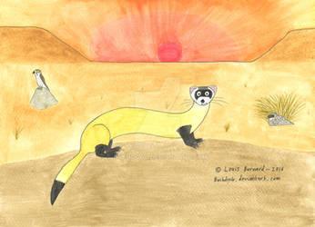 'Animal of the Week' - Black-footed Ferret by Bushdog4