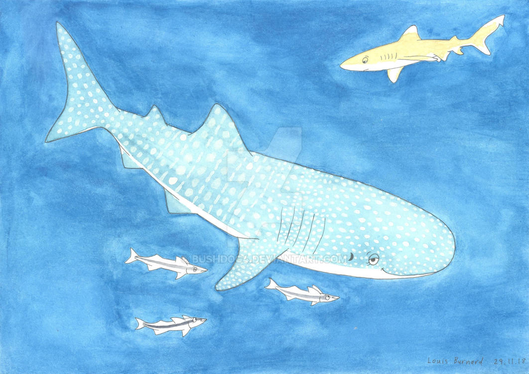 'Animal of the Week' - Whale Shark by Bushdog4
