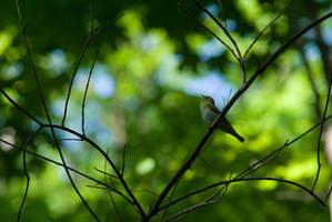 Singer bird by tonixart