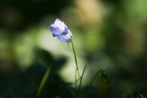 Bellflower by tonixart