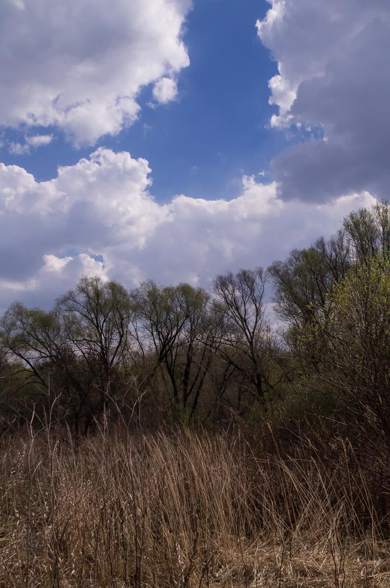 Willows by tonixart