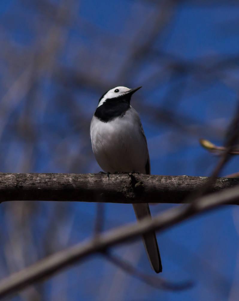 Birdie by tonixart