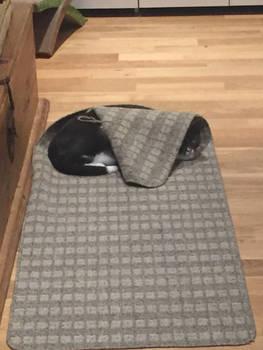 Kitty in a blankie