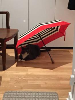 Kitty under an umbrella
