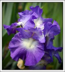 Pretty In Purple by deefilly