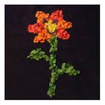 Confettiflower by Leichenengel