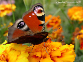 Butterfly effect by jazona