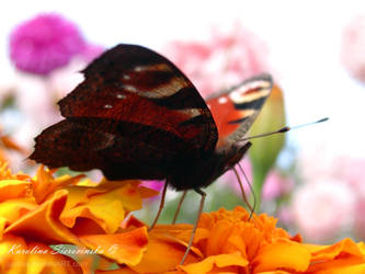 Butterfly effect -2- by jazona