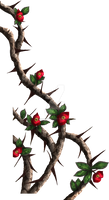 Crown-of-thorns - painted