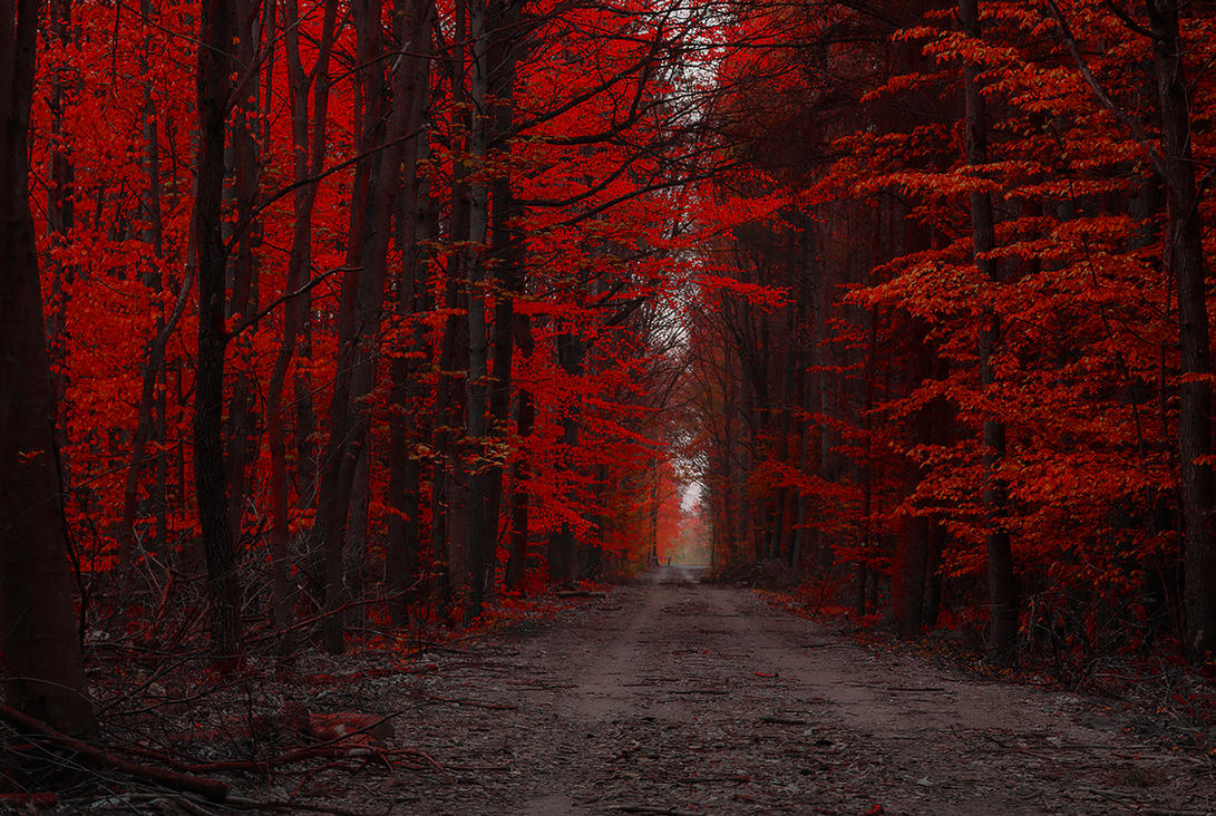 Forest by jacekson