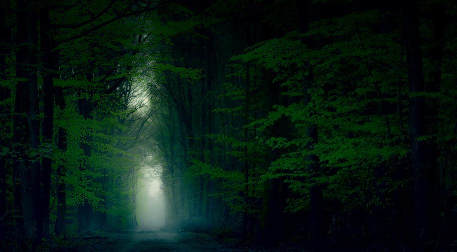 Fog by jacekson