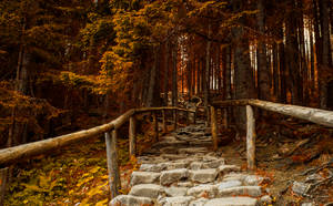 Stairs by jacekson