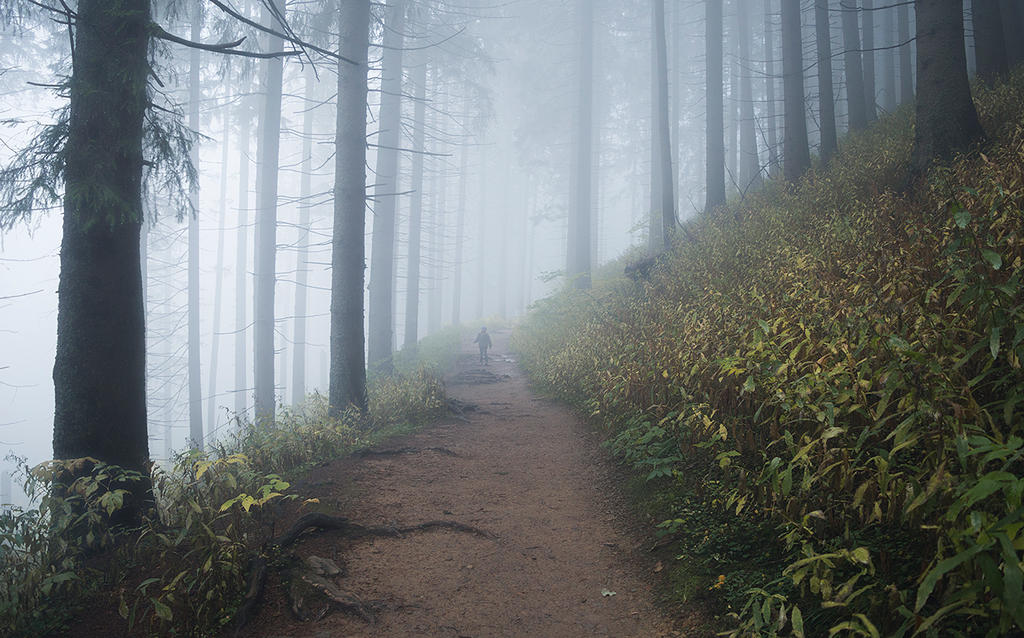 lost in the fog. by jacekson