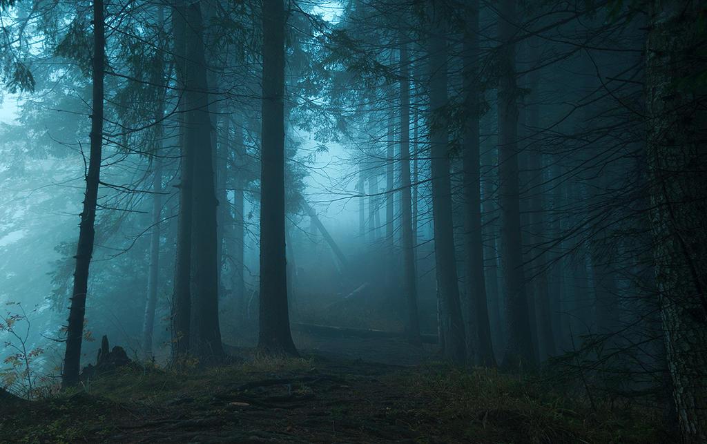Fairyland by jacekson