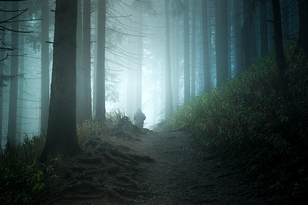 in the forest. by jacekson