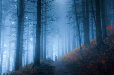 mystic forest. by jacekson