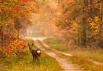 Roe-deer by jacekson