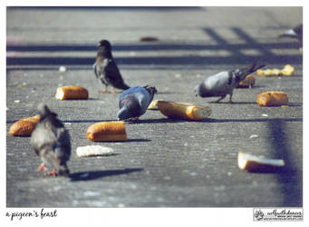 A Pigeon's Feast