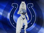 Go Colts SuperBowl 44