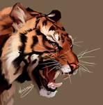 Tiger (Photo study)