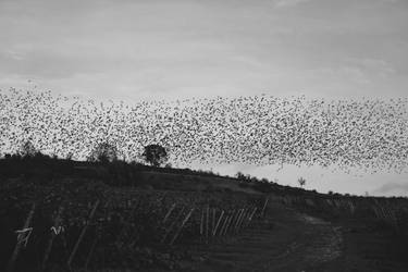 Birds II by blessant