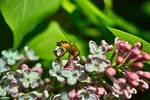 Springtime Fly