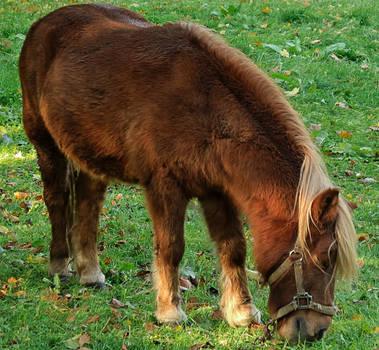 My little Horse by zeropainter