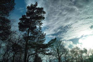 Trees, Clouds and Sun