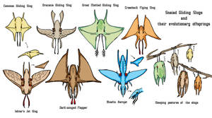 Snaiad Gliding Slugs