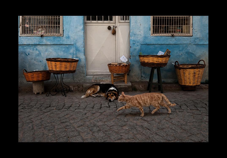 Cat and Dog... 2012_07 by ErkanKalenderli