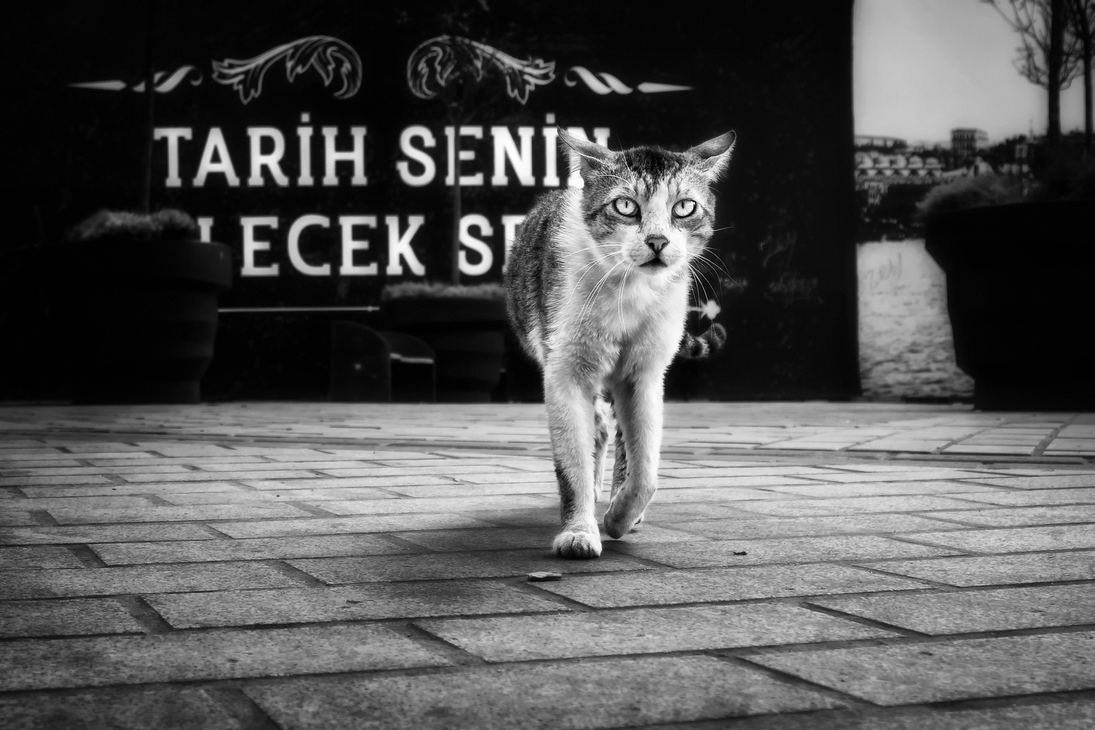 Erkanmatik 2016 06 by ErkanKalenderli
