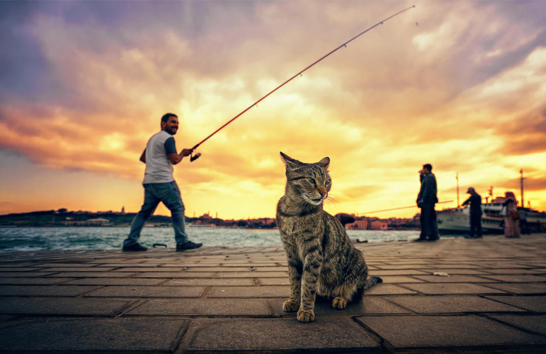 A Cat and Fishemen by ErkanKalenderli