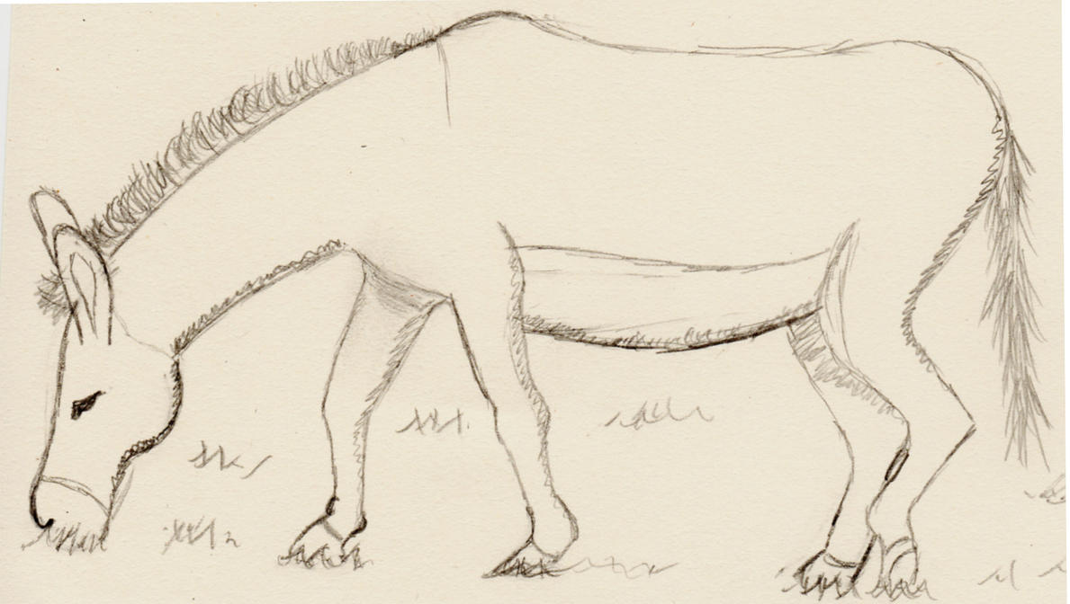 Line Drawing Donkey : Donkey sketch by lordgarth on deviantart