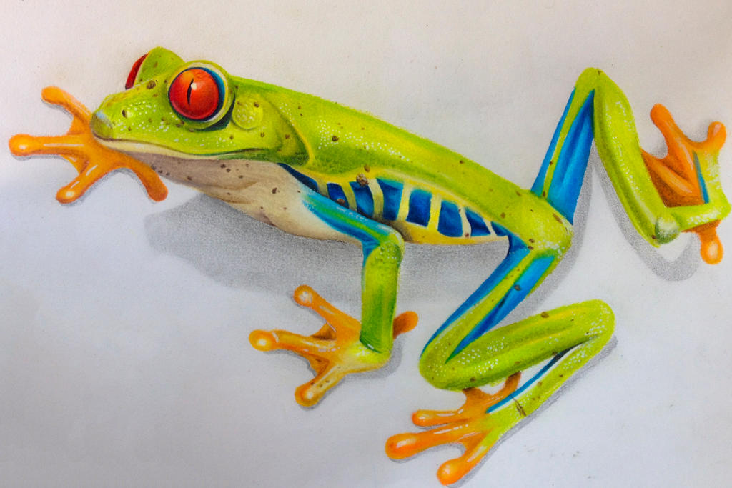 Realistic Tree Frog Drawings Color Pencil Re...