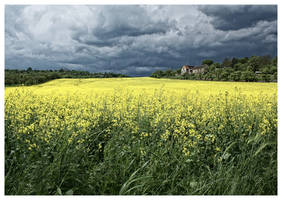 the field by kruemel-sangerhausen