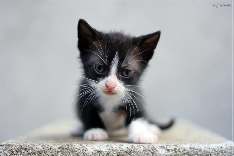 Baby Kittens Black