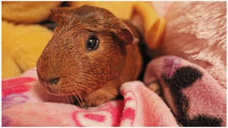 Comfy Piggy! by Karen73
