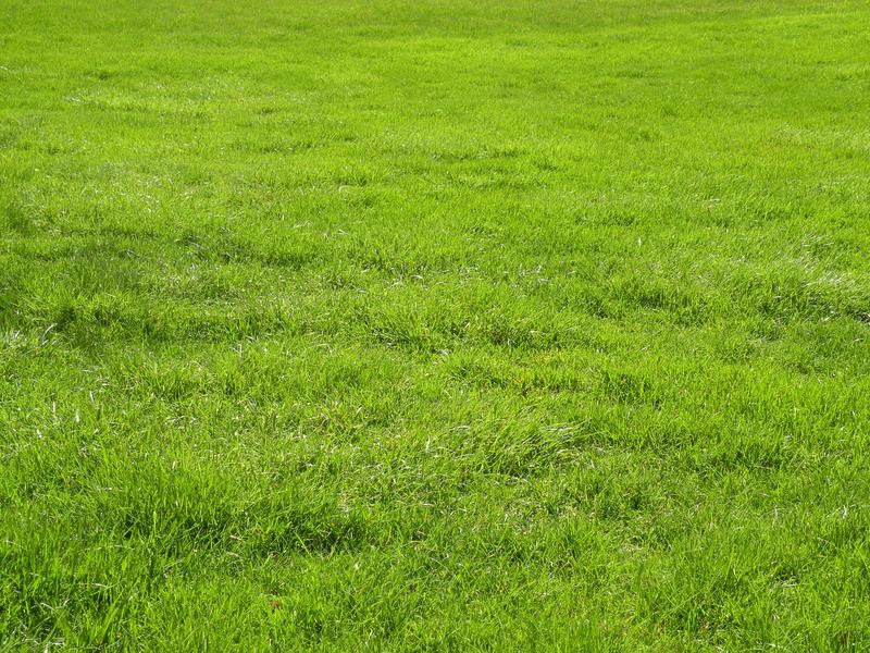 Grass Stock By Rai Stock On Deviantart