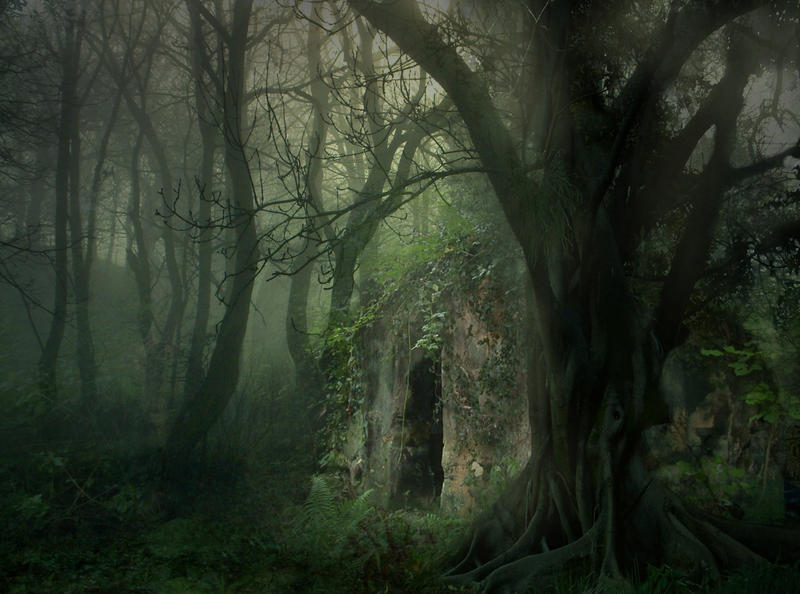 Forest Haven STOCK by wyldraven