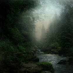 Forest Stream STOCK by wyldraven