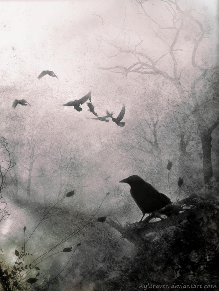 Ravens flying wallpaper - photo#45