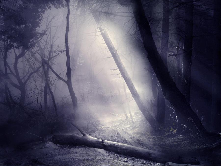 The Misty Woods STOCK