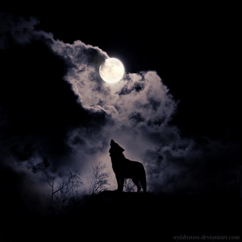telihold idézetek Névtelen bejegyzés   Farkas őseink