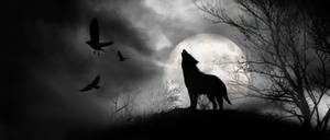 Wolf Journal header